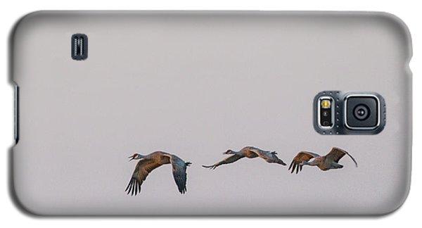 Sandhill Crane Flying 2 Galaxy S5 Case