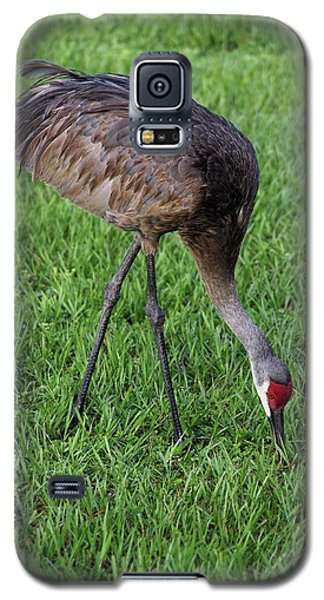 Galaxy S5 Case featuring the photograph Sandhill Crane II by Richard Rizzo