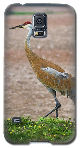 Galaxy S5 Case featuring the photograph Sandhill Crane In Profile by Bill Pevlor