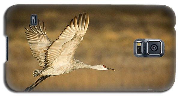 Sandhill Crane Galaxy S5 Case