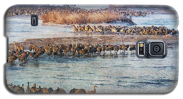 Sandhill Crane Platte River - Textured Galaxy S5 Case