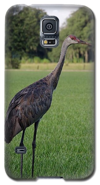Galaxy S5 Case featuring the photograph Sandhill Crane by Richard Rizzo