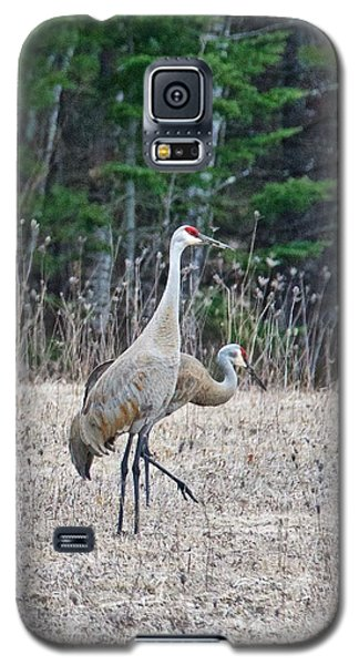 Galaxy S5 Case featuring the photograph Sandhill Cranes 1166 by Michael Peychich