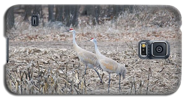 Galaxy S5 Case featuring the photograph Sandhill Cranes 1171 by Michael Peychich