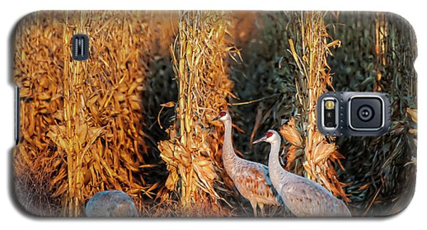 Sandhill Cranes At Sunrise Galaxy S5 Case