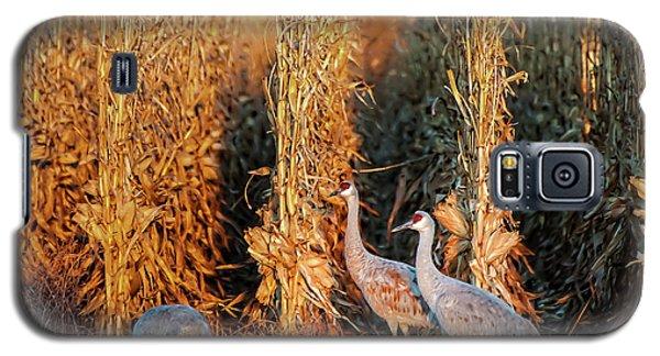 Sandhill Cranes At Sunrise Galaxy S5 Case