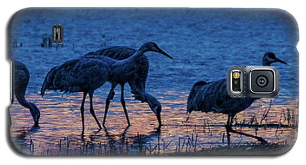 Sandhill Cranes At Twilight Galaxy S5 Case