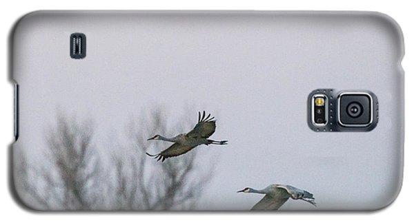 Sandhill Cranes Flying Galaxy S5 Case