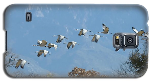 Sandhill Cranes In Flight Galaxy S5 Case