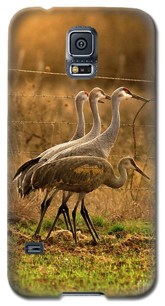 Galaxy S5 Case featuring the photograph Sandhill Cranes Texas Fence-line by Robert Frederick