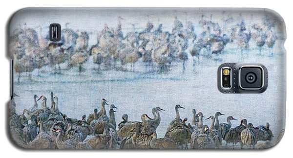 Sandhill Cranes Texture Galaxy S5 Case