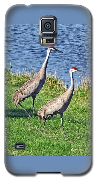 Sandhill Pair Galaxy S5 Case