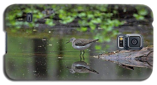 Sandpiper In The Smokies II Galaxy S5 Case by Douglas Stucky