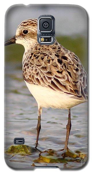Sandpiper Portrait Galaxy S5 Case
