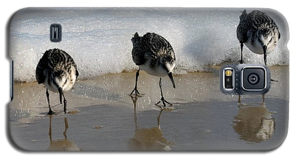 Sandpipers Feeding Galaxy S5 Case