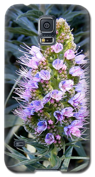 Santa Monica In Bloom Galaxy S5 Case