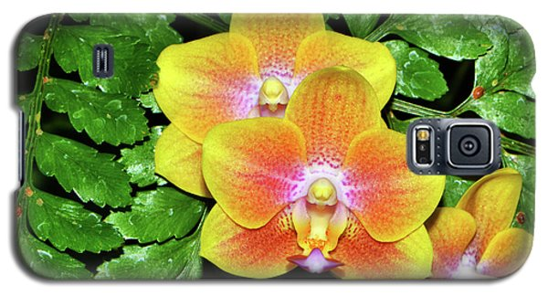 Sara Gold Orchids 003 Galaxy S5 Case