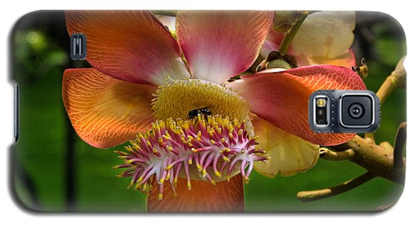 Sara Tree Flower Dthb104 Galaxy S5 Case