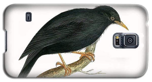 Sardinian Starling Galaxy S5 Case by English School