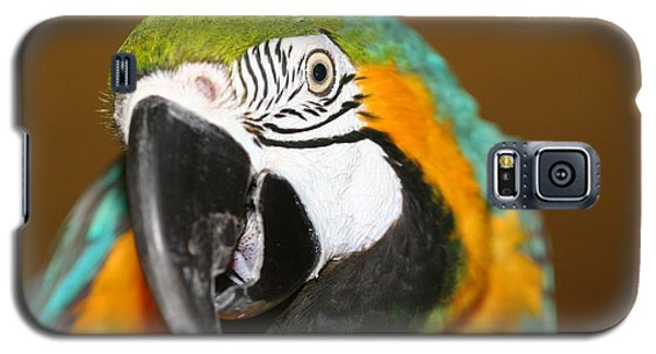 Galaxy S5 Case featuring the photograph Sassy Blue And Gold Macaw by Diane Merkle