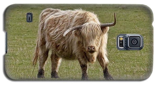 Sauvie Island Cow Galaxy S5 Case