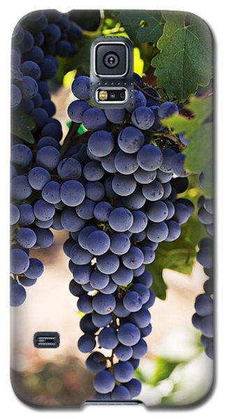 Sauvignon Grapes Galaxy S5 Case