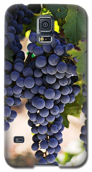 Sauvignon Grapes Galaxy S5 Case by Garry Gay