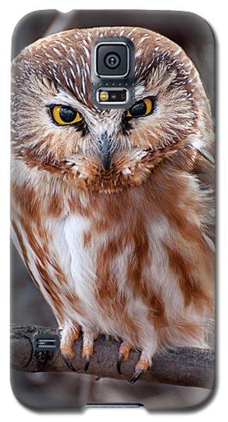 Saw-whet Owl Galaxy S5 Case