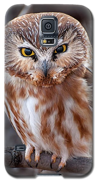 Galaxy S5 Case featuring the photograph Saw-whet Owl by Britt Runyon