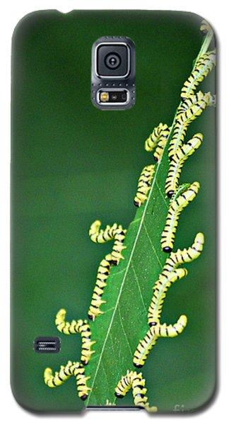 Sawflies Galaxy S5 Case