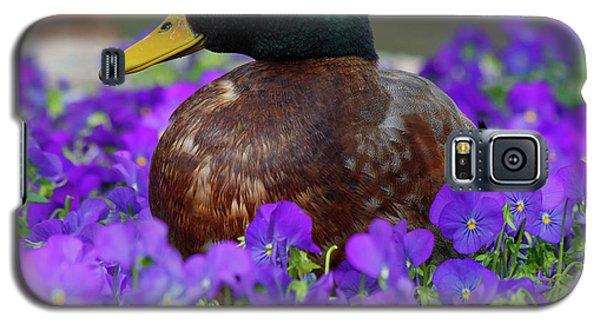 Say Quack Galaxy S5 Case