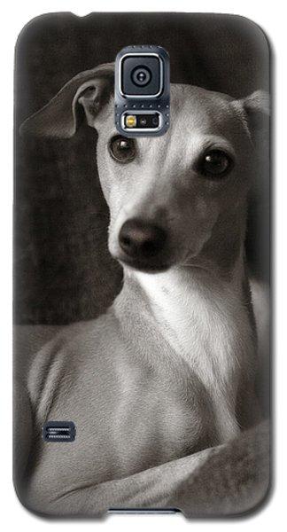 Say What Italian Greyhound Galaxy S5 Case by Angela Rath