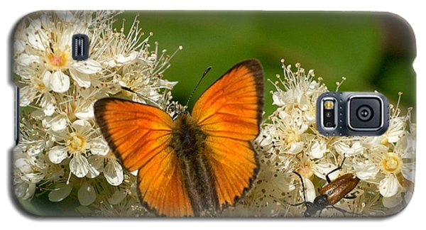 Galaxy S5 Case featuring the photograph Scarce Copper 2 by Jouko Lehto