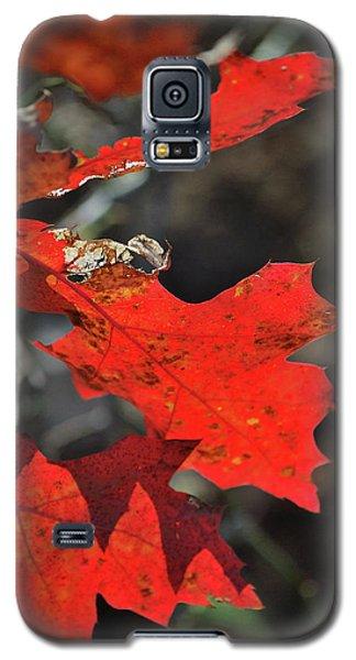 Scarlet Autumn Galaxy S5 Case