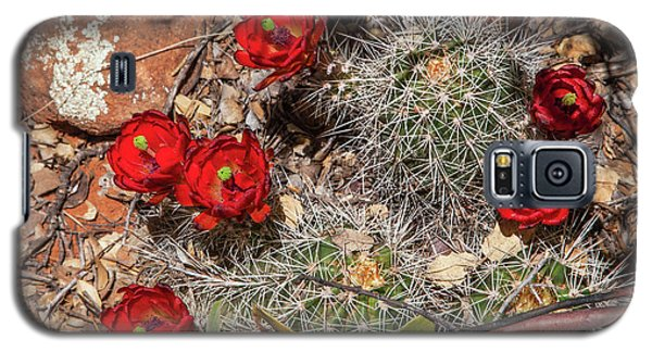 Scarlet Cactus Blooms Galaxy S5 Case