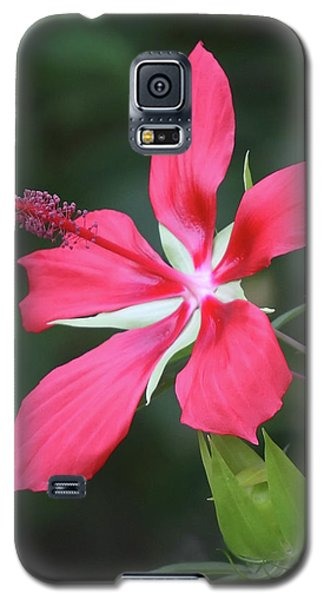 Scarlet Hibiscus #4 Galaxy S5 Case