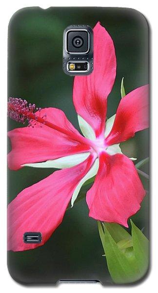 Scarlet Hibiscus #4 Galaxy S5 Case