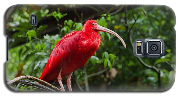 Scarlet Ibis Galaxy S5 Case by B.G. Thomson