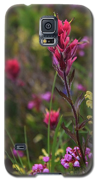 Galaxy S5 Case featuring the photograph Scarlet Paintbrush by David Chandler