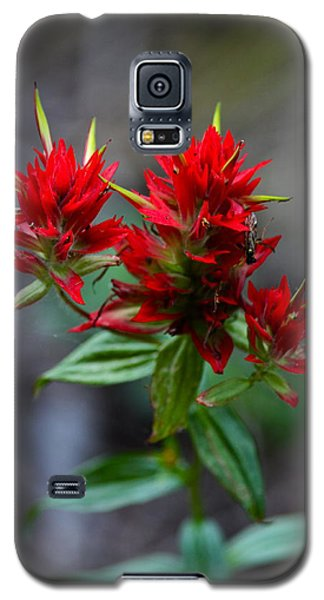 Scarlet Red Indian Paintbrush Galaxy S5 Case