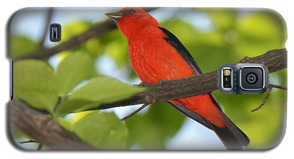 Scarlet Tanager Galaxy S5 Case by Alan Lenk
