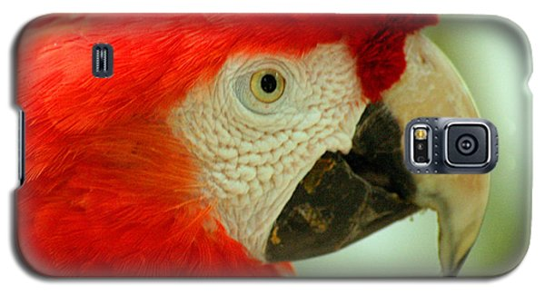 Scarlett Macaw South America Galaxy S5 Case by Ralph A  Ledergerber-Photography