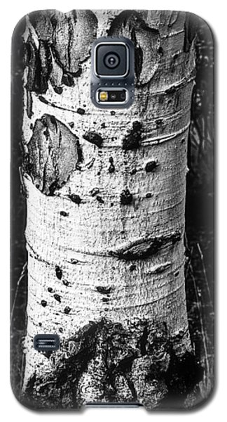 Scarred Old Aspen Tree Trunk In Colorado Forest Galaxy S5 Case