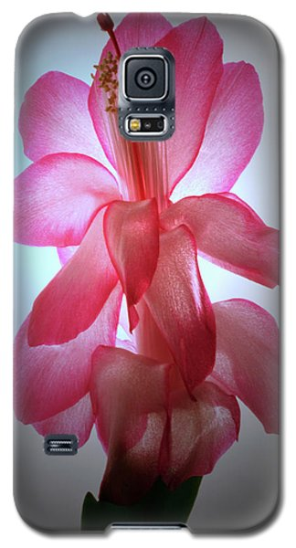 Galaxy S5 Case featuring the photograph Schlumbergera Portrait. by Terence Davis
