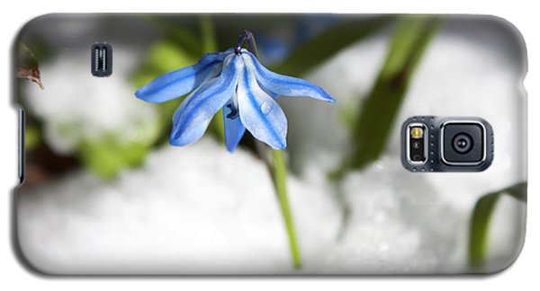 Galaxy S5 Case featuring the photograph Scilla In Snow by Jeff Severson