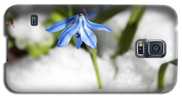 Scilla In Snow Galaxy S5 Case by Jeff Severson