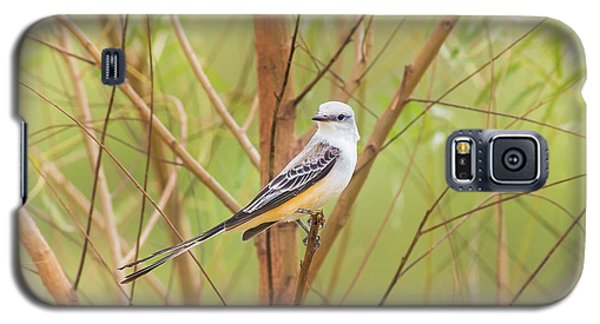 Galaxy S5 Case featuring the photograph Scissortail In Scrub by Robert Frederick