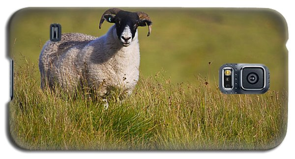 Galaxy S5 Case featuring the photograph Scottish Blackface Sheep On Green Field by Gabor Pozsgai