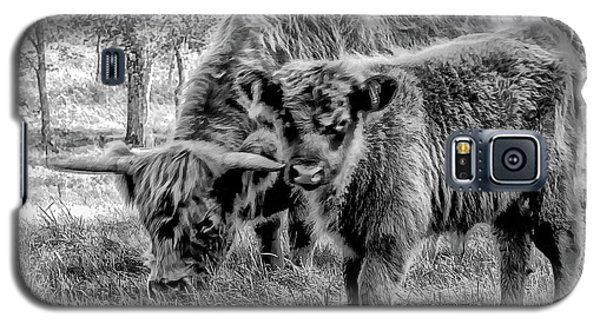 Scottish Highland Cattle Black And White Galaxy S5 Case by Constantine Gregory