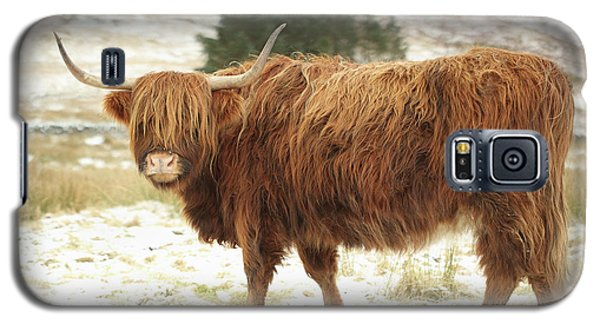 Scottish Red Highland Cow In Winter Galaxy S5 Case